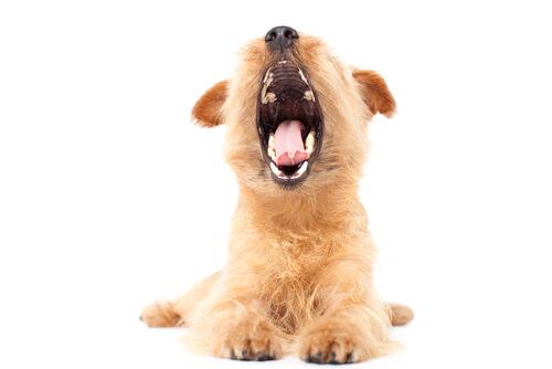 犬の口臭がひどいときに飼い主が見逃しがちな重大な病気