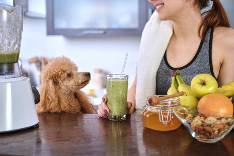 【獣医師監修】犬がスムージーを飲んでも大丈夫?使える食材と危険な食材は?メリットや注意点!