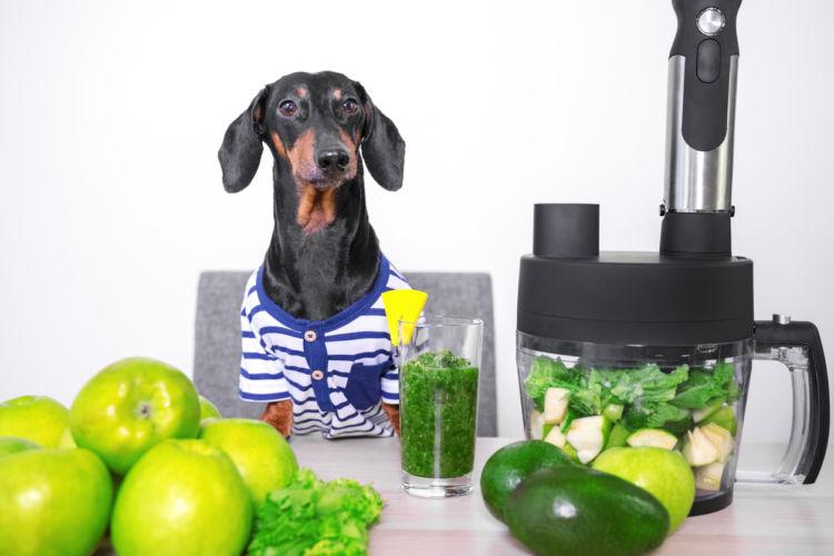 犬がスムージーを飲んでも大丈夫! ただし、犬に安全な食材を!