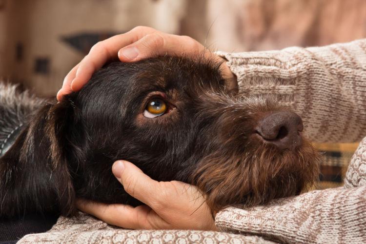 ジャスミン茶を飲んだ犬の中毒症状