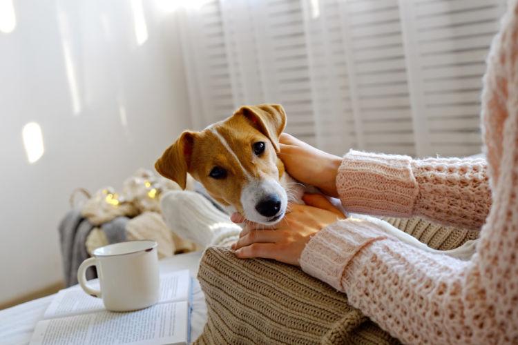 犬がジャスミン茶を飲んだ時のまとめ