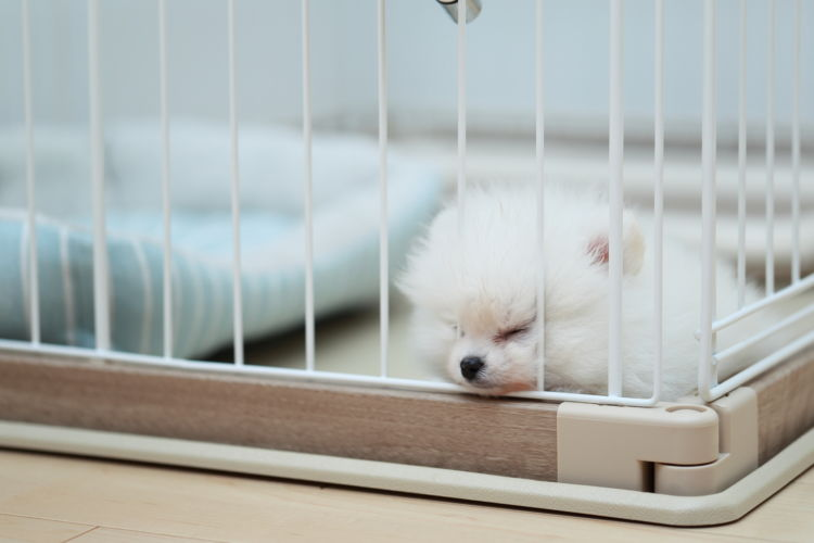【獣医師監修】犬の平均睡眠時間は長い?短い?ずっと寝ているけど大丈夫?子犬や老犬は?