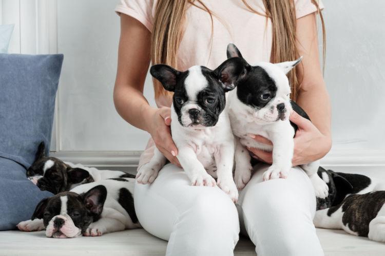 フレンチ・ブルドッグのトイレトレーニングの注意点②「子犬」と「成犬」、「オス」と「メス」の違い