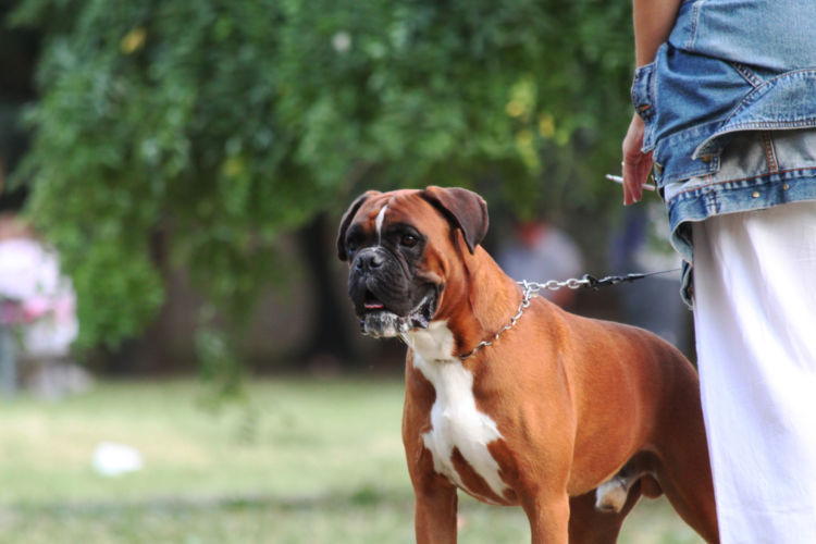 【獣医師監修】犬のタバコの誤飲、影響は?ニコチン中毒で死亡の可能性も?対処方法や注意点!