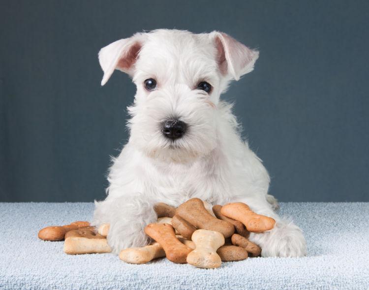 注意点⑤「心臓病や腎臓病の犬はおやつに注意!」