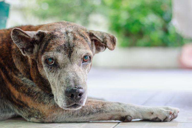 ポイント・コツ③「老犬への薬の飲ませ方は?」