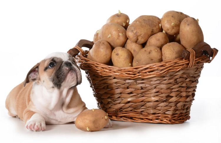 デメリット①「犬は生のデンプンを消化できない」