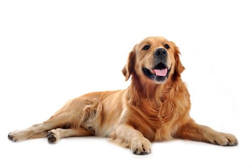 もしも愛犬ががんになったら?早期発見のために知っておきたい、骨肉腫の初期症状5つ