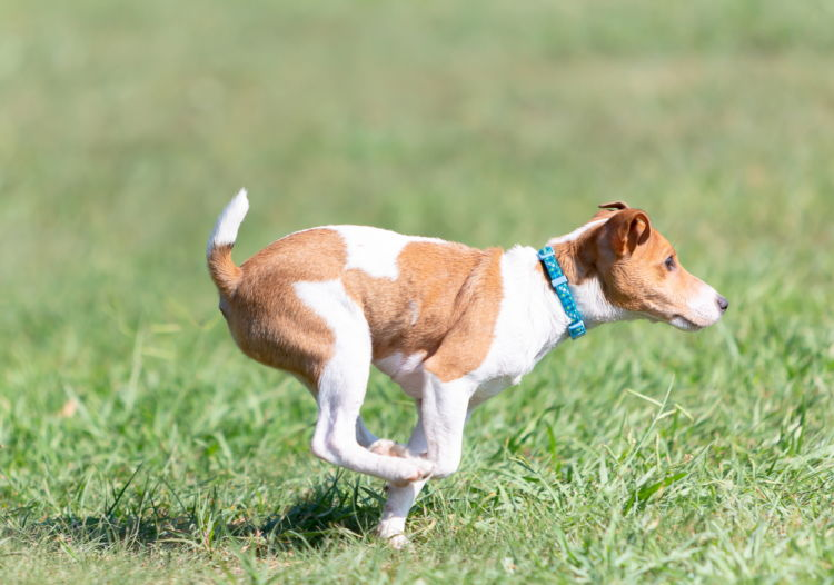 メリット①「デンプンは犬のエネルギー源」