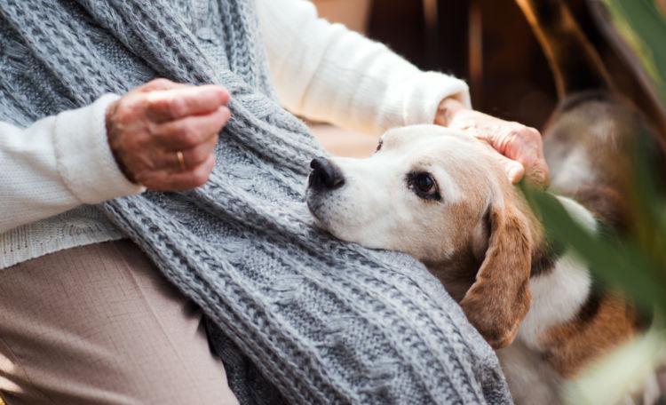 老犬ホームが生まれた背景②「人と犬の高齢化・長寿化の裏側にある問題」