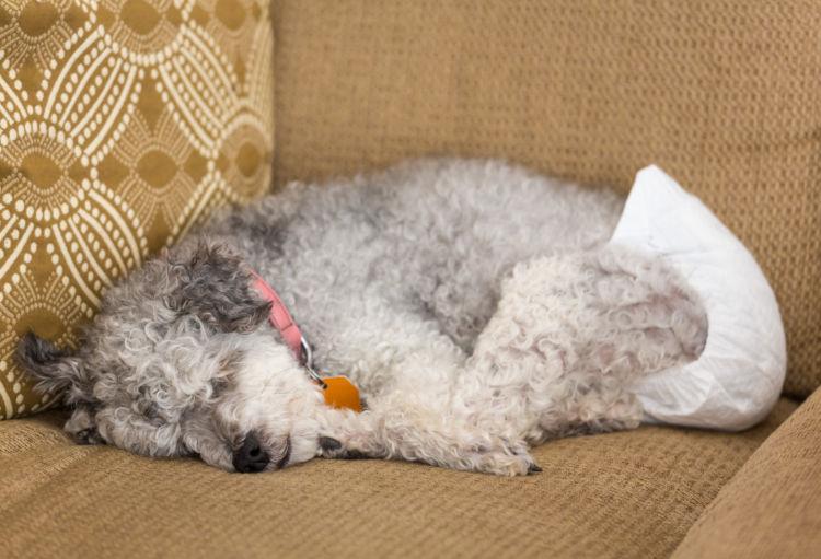 老犬ホームが生まれた背景④「老犬介護生活の長期化」