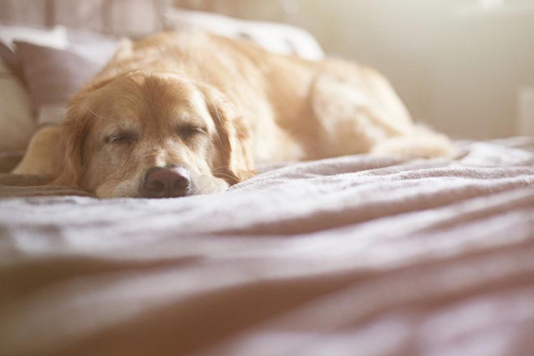 【獣医師監修】老犬ホームとはどんなサービス?メリットやタイプ、料金、選び方のポイントは?