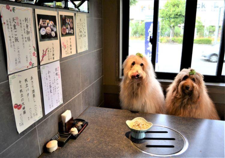 【犬連れOK】そば・炭火焼きダイニング 吉田家