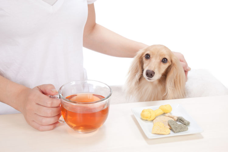 犬に紅茶を飲ませてはダメ!その理由は?