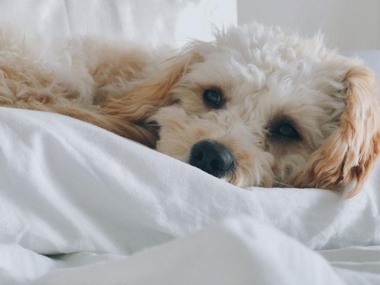誤飲した場合の応急処置と対処法⑤【今の犬の様子を伝える】