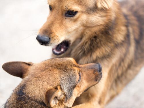 なぜ、犬は飼い主にもマウンティングするのか?その行為に秘められた意味と効果的なしつけ方