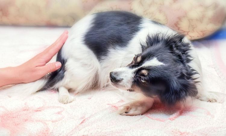 犬に与える「ラムネ」の危険な成分や注意点は?
