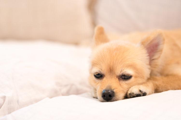 犬 緊急時 動物病院