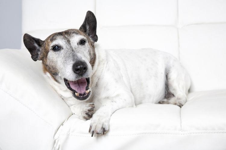 低血糖 犬 応急処置
