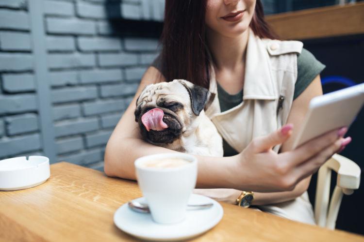 犬に「カフェオレ」を飲ませても大丈夫?