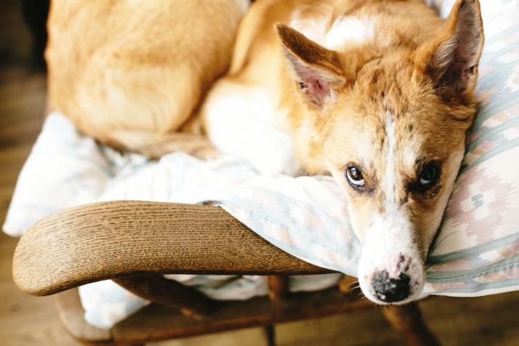 誤飲の応急処置・対処法⑤【応急処置は獣医師の指示に従う!】