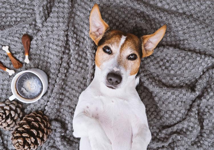 犬が「コーヒー」を飲んでしまった場合のカフェイン中毒症状は?