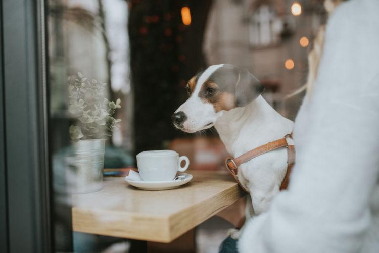 犬の【コーヒーの誤飲】まとめ