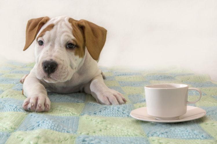 犬に与える「お茶」まとめ