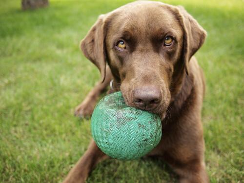ボール遊びが得意な犬ほど、優秀?愛犬のストレスを発散させるボール遊びのコツ