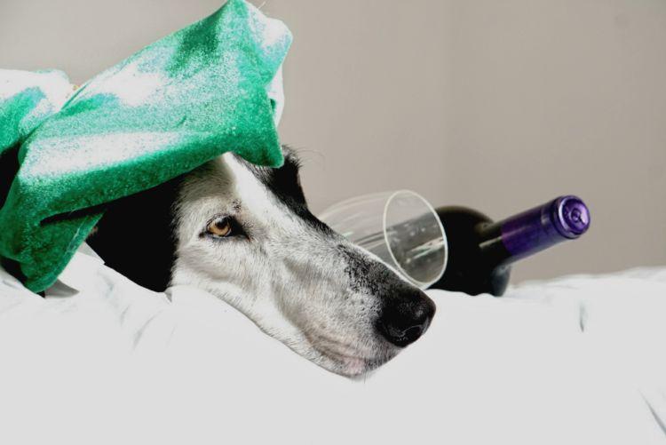 犬に「ワイン」を飲ませてはダメ!その理由は?