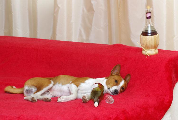 犬が「ワイン」を飲んだ場合の中毒症状は?