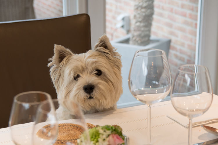 犬が「ワイン」を飲んでしまった場合のまとめ