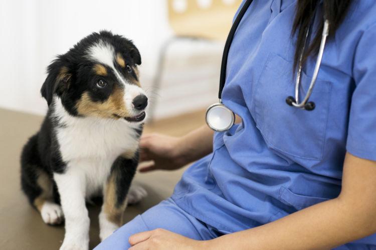 対処法と応急処置⑥「普段から獣医師に相談」