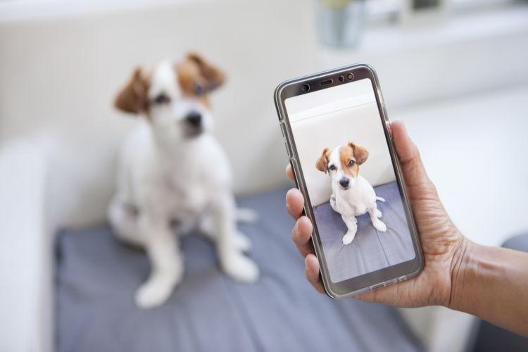 焼酎を誤飲した場合の応急処置・対処法④【今の犬の様子を伝える】