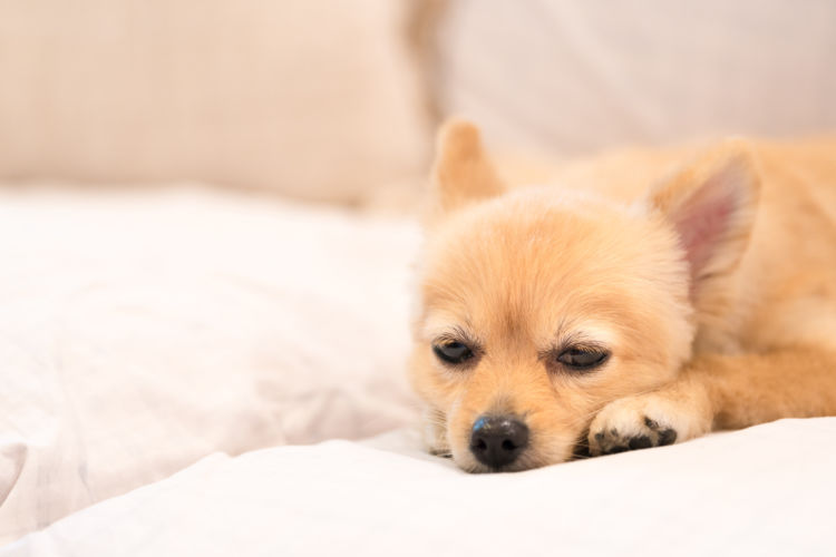 【獣医師監修】老犬の下痢が止まらない(繰り返す)原因や理由は?食事や対処法・予防対策!