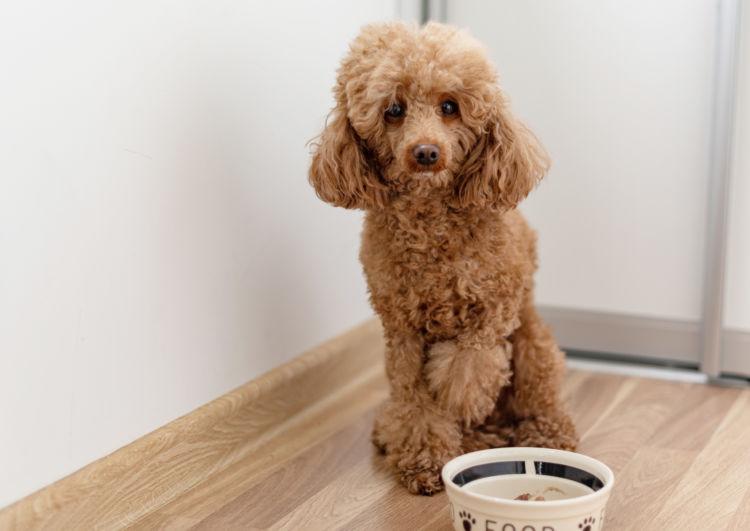 老犬の下痢【治療法・治療費】