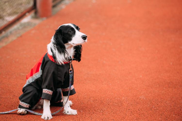 老犬の下痢「予防対策」⑨【体のチェック(体温)】
