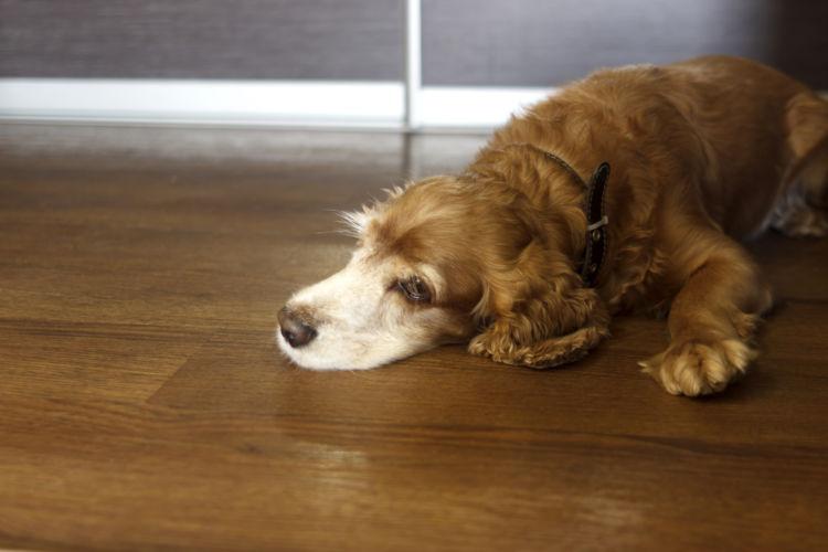犬 自律神経 ストレス 影響