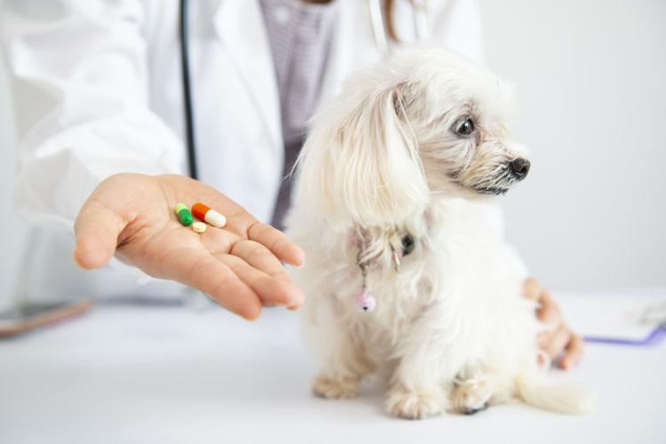 犬 てんかん薬 種類 豊富