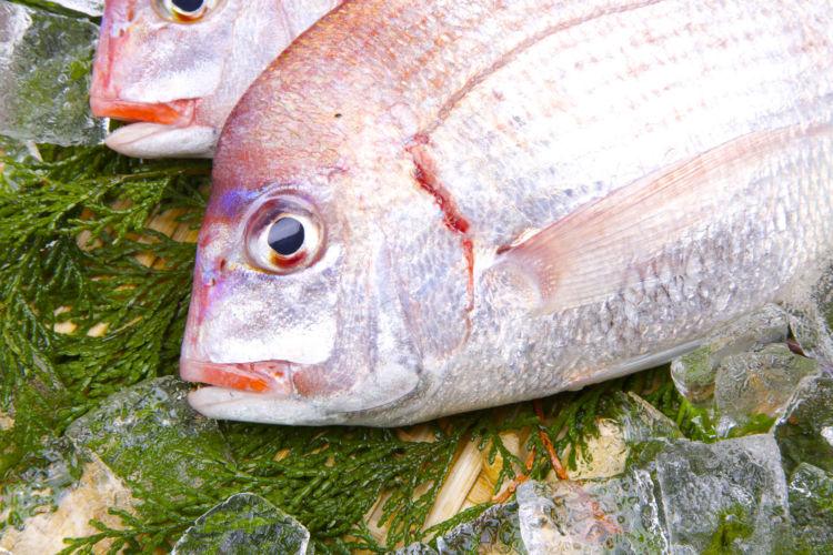 食べても良いおせち料理の具材⑦【鯛】
