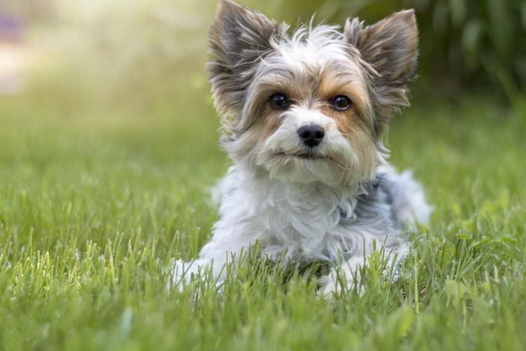 小型犬の平均寿命は大型犬より長い?