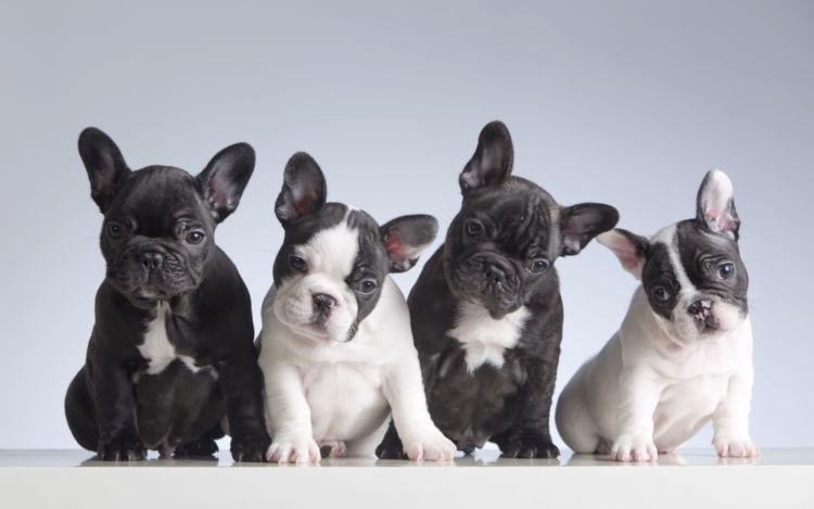 小型犬の中でも寿命が短い犬種は?
