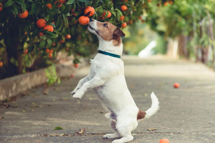 犬が「みかん」を食べても大丈夫!