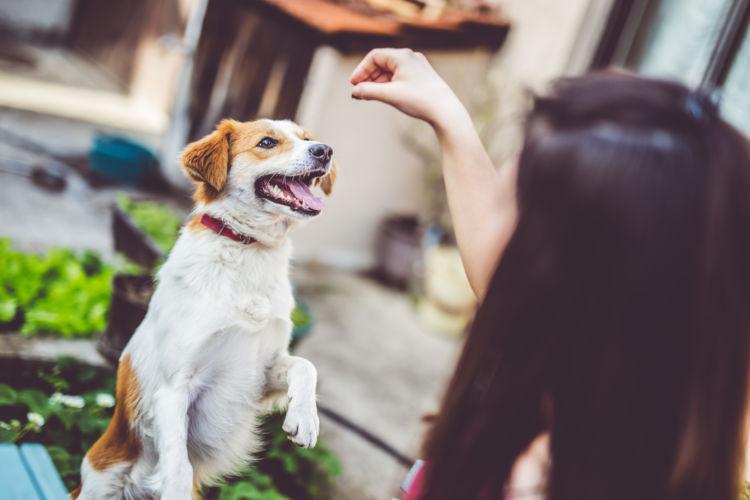 犬に「みかん」を与える際の注意点!