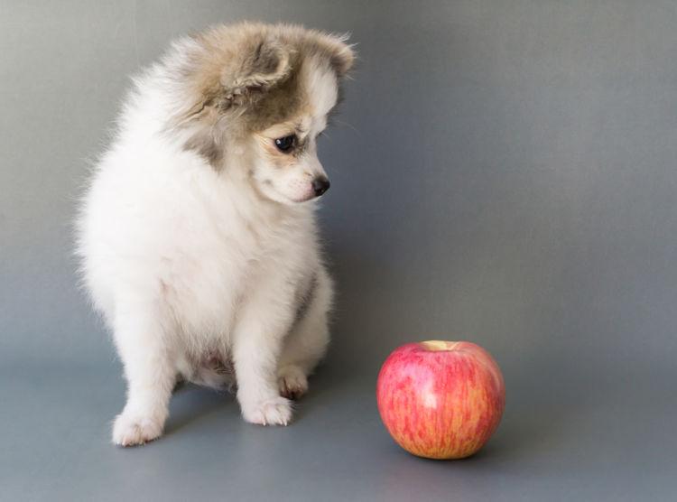 【子犬】や【老犬】にりんごを与えても大丈夫?