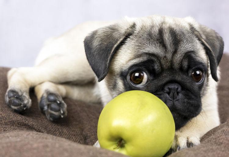 犬にりんごを与える際の【注意点!】