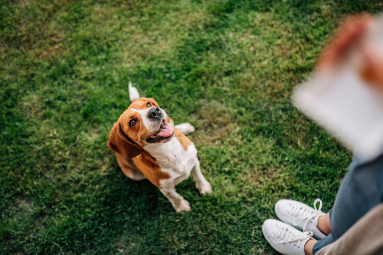 i犬 お楽しみ ご褒美
