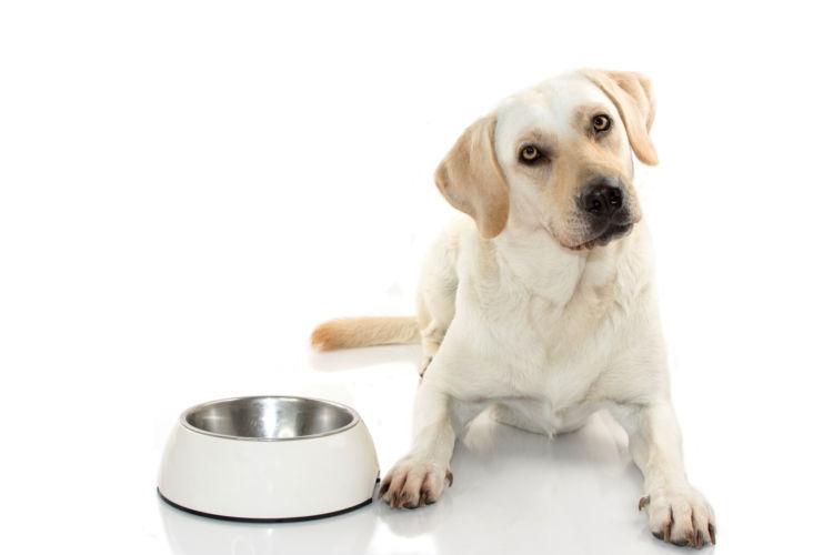犬に「キャベツ」を与える際の適量は?(小型犬・中型犬・大型犬)