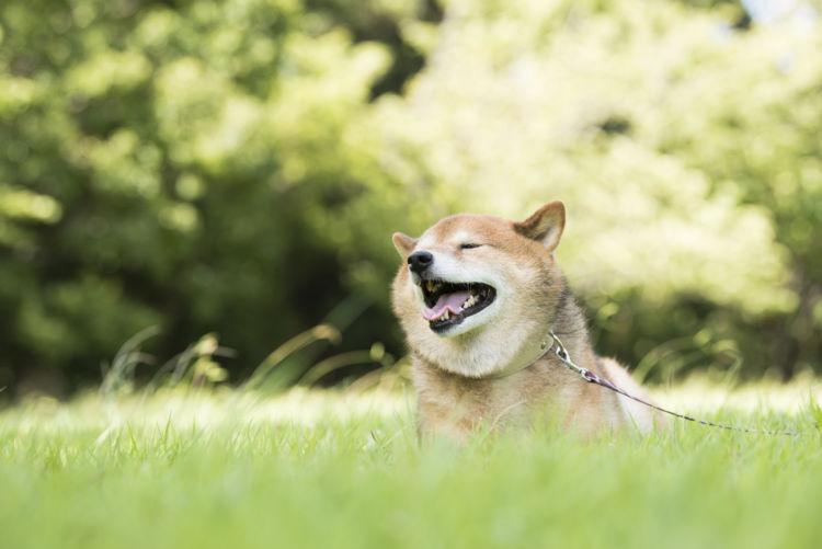 老犬の夜鳴き「対策」①【適度な運動】