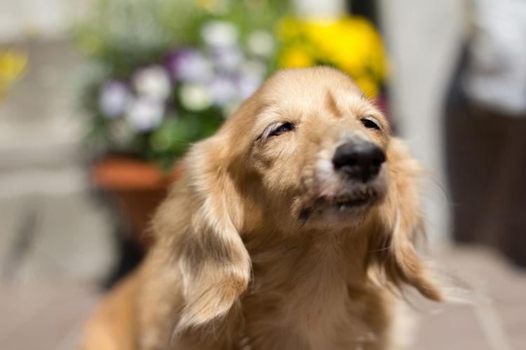 老犬の夜鳴き「対策」⑤【日光浴】